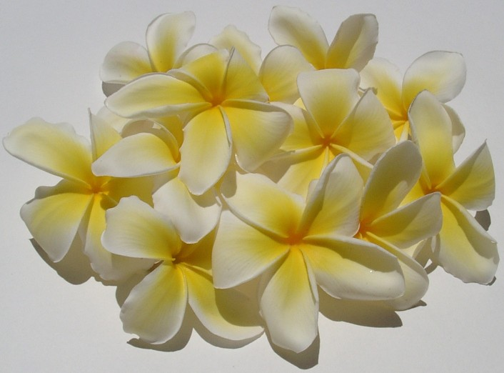 Fresh flowers and leis ship from hawaii 1 808 732 7385 hawaiian check here to order your flowers leis mightylinksfo