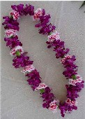 Purple Dendrobium / Pink Carnation